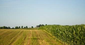 Рада схвалила законопроєкт про ринок землі й розблокувала свою роботу