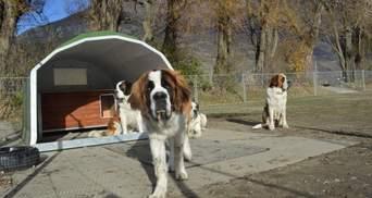 Музеї собак, куди ви можете прийти зі своїм улюбленцем чи усиновити тварину