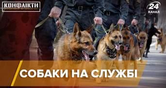 Від ліквідації терористів до пошуку людей: історії 5 знаменитих пошукових собак