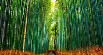 Шварцвальд и Монтеверде: удивительные леса планеты, которые поразят ярого путешественника – фото