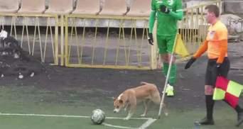 12 игрок в составе Нивы: собака сорвал угловой Карпат в Виннице – курьезное видео