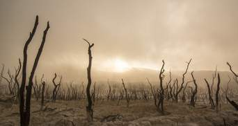 Сельское хозяйство под большой угрозой: эксперт о климатическом кризисе в Украине