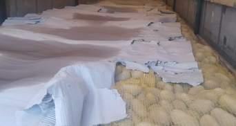 Рекордна партія: митники конфіскували понад 2 тонни контрабандної картоплі – фото