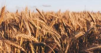 Пшениця, олія та папір: уряд України заборонив імпорт з Росії низки товарів
