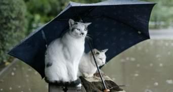 Украину накроют дожди и снова вернется мокрый снег