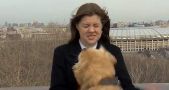 Пес в прямом эфире выхватил у журналистки микрофон: смешное видео