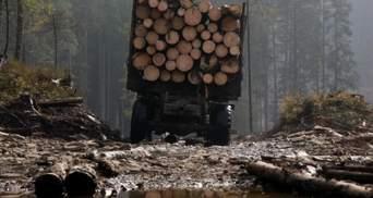 Лісова злочинність в Україні: як діє і що заважає з нею боротися