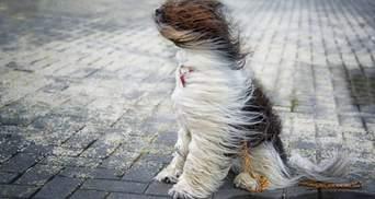Мощный ветер и лавины в Карпатах: в Украине объявили штормовое предупреждение