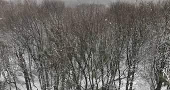 Львов посреди апреля припорошило снегом: красноречивые фото, видео