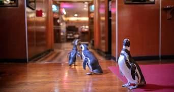 Как в кино: для чего пингвины посетили роскошный ресторан в Чикаго – фото