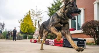 Служебная собака укусила полицейского, который бил мужчину: видео