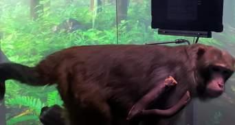 Обезьяна сыграла в пинг-понг на компьютере с помощью имплантата Neuralink