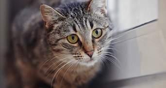 За жорстоке вбивство кота одеситка постане перед судом