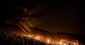 Словно кадры из Disney: чтобы спасти виноградники, во Франции фермеры зажгли тысячи костров