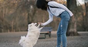 Могут ли собаки ревновать хозяев: ученые дали интересный ответ – видео