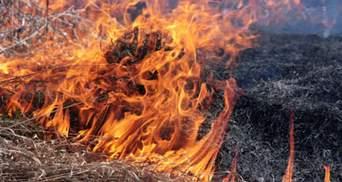 На Луганщині знову все запалало: горить сухостій  – відео