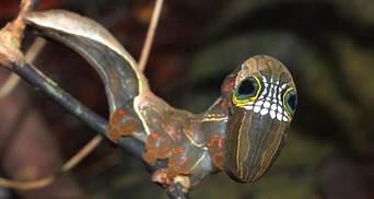 Чтобы защититься от хищников: забавные фото редкой гусеницы, которая имитирует череп