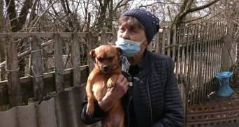 Сім'я Котів врятувала пів сотні собак: історія подружжя з Рівненщини