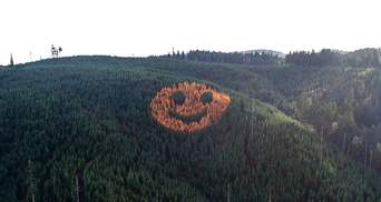 Гігантська усмішка з дерев, яку видно з неба: американські лісники створили смайлик серед лісу