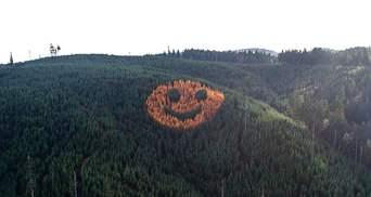 Гигантская улыбка с деревьев, которая видна с неба: американские лесники создали смайлик в лесу