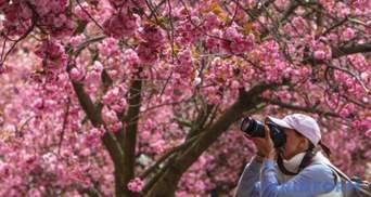 На сакуры в Ужгород: как устроить незабываемую поездку