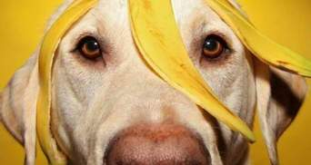 Можно ли собаке есть бананы: ответ ветеринаров