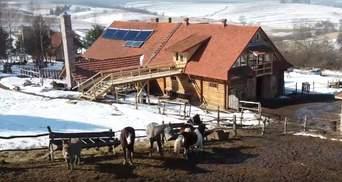 Любовь к лошадям превратил в бизнес: львовянин покинул город и построил собственное ранчо в селе