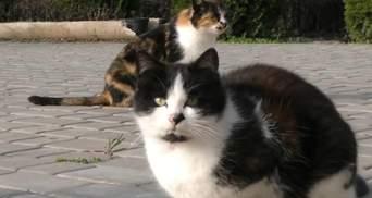 На Херсонщині чоловік влаштував на роботу котів: які обов'язки й зарплатня у тварин