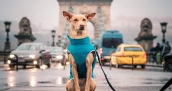 Популярная собака-путешественник Чапати подготовила сюрприз для украинцев