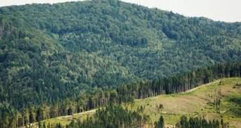 В Украине инвентаризуют леса: правительство утвердило порядок процедуры