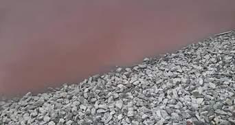 Пруд красный от крови животных: на Днепропетровщине обнаружили экологическое преступление – фото
