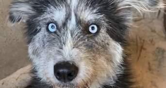 Безпритульна собака просила людей допомогти своїм цуценятам: чим закінчилася зворушлива історія