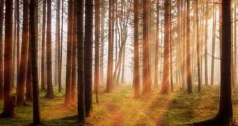 Украина – рекордсмен по озеленению планеты