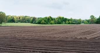 Відкриття ринку землі: як зміняться стосунки власника і орендаря