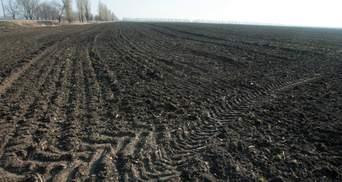 Право на безкоштовну землю можуть монетизувати: несподівана заява чиновника Держгеокадастру
