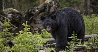 В Колорадо медведь насмерть разорвал женщину: она выгуливала 2 собак