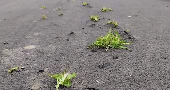 Сквозь новенькую дорогу пробились сорняки: фото невероятной силы природы Днепропетровщины
