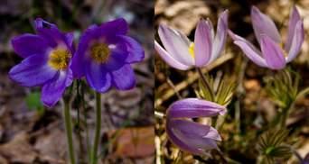 В Чернобыльской зоне расцвели редкие цветы: невероятные фото растений