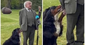Песик президента Ірландії не давав йому виголосити промову, бо хотів бавитися