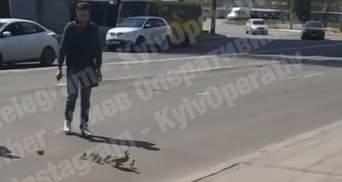 Качка з каченятами перейшла дорогу пішохідним переходом: миле відео з Виноградара у Києві