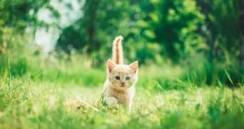 """В Шотландии водитель подобрал на дороге котенка, а тот оказался с """"сюрпризом"""""""