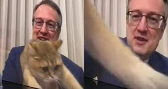 Стал звездой прямого эфира: кот Геращенко внезапно попал в кадр – милые фото