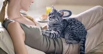 Чому коти топчуть людей лапками: несподівані причини