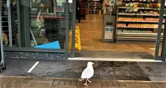 Крилатий крадій: чайка увійшла до магазину і вкрала бутерброд з тунцем – відео