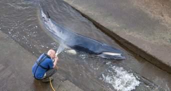 Маленького кита, який застряг на мілині у Темзі, довелося приспати
