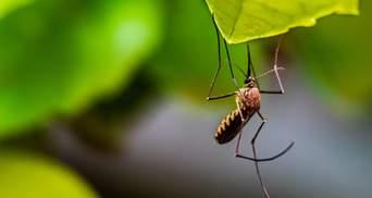 Вчені випустили в природу мільйони ГМО-комарів