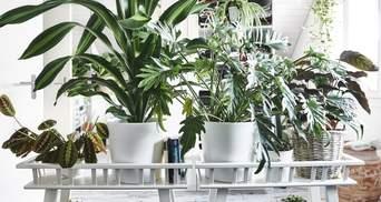 Зелень в доме: 5 растений, которые оценят новички