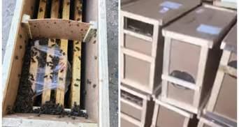 """Мертвые пчелы загудели: часть """"умерших"""" насекомых из грузовика Укрпочты ожила"""