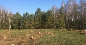 Как остановить обезлесение в Украине