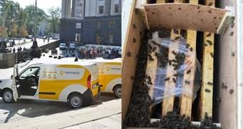 В Укрпочте ожили пчелы, но отправитель отказывается их забирать